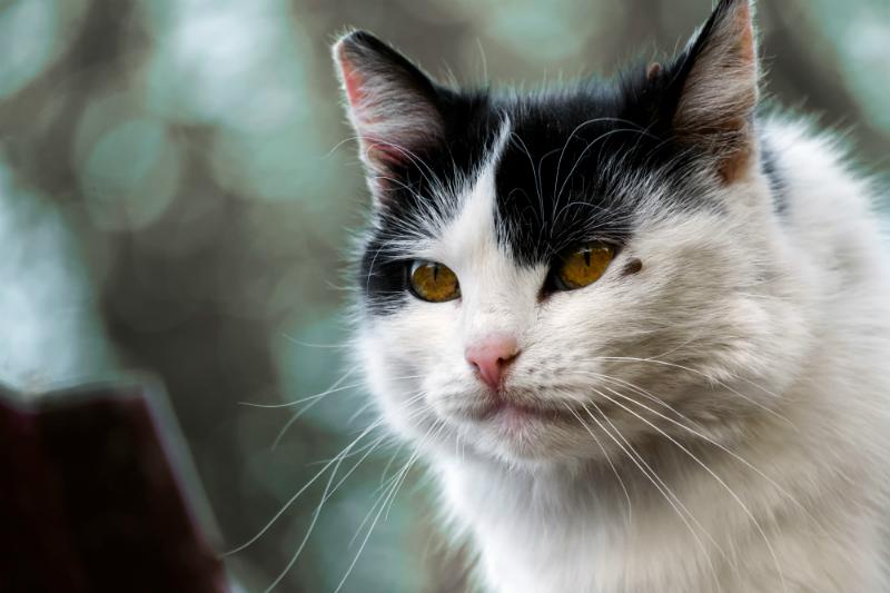 catsticks