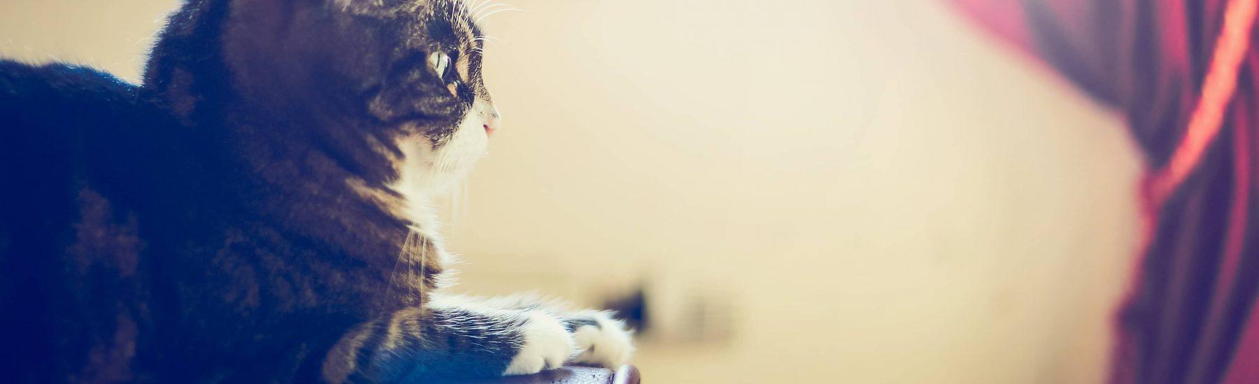 cat_senior