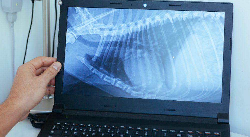 Cat X-Ray & Ultrasound