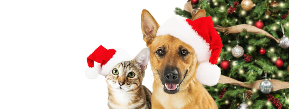 cat and dog with christmas tree