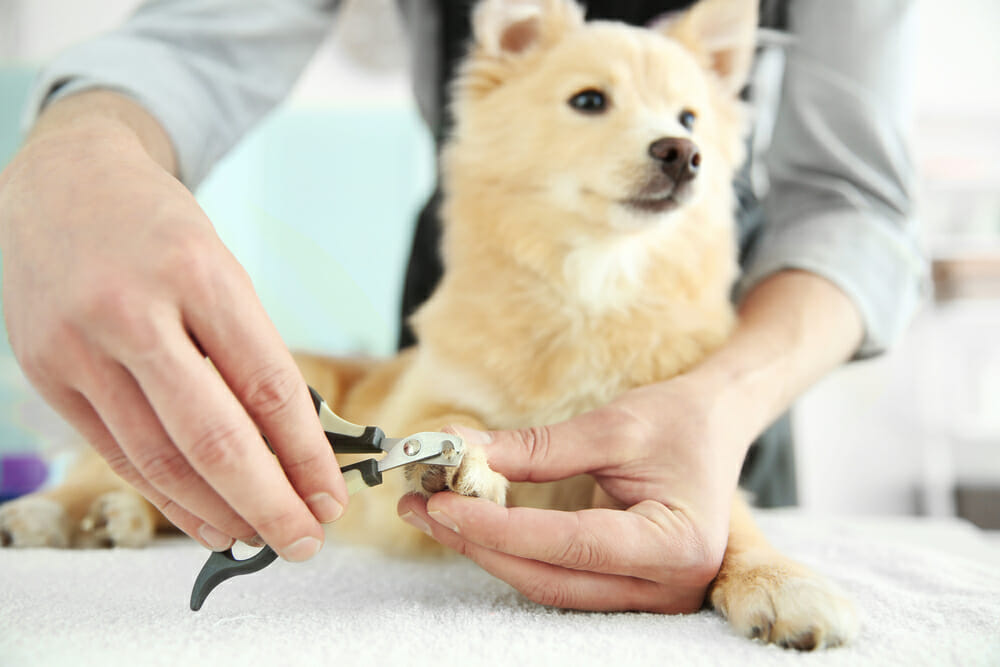 dog nails trim