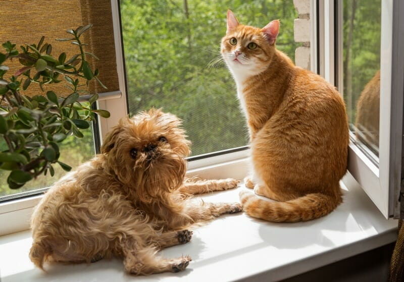 cat and dog on window sill